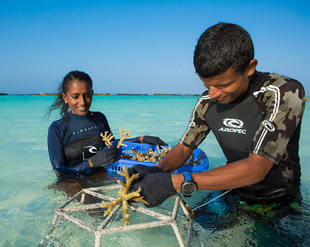 Maldives activities | Coral gardening Image | Kurumba Maldives