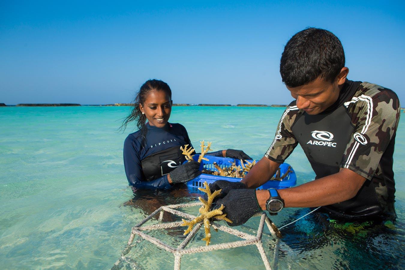 كورومبا المالديف منتجع لزراعة المرجان