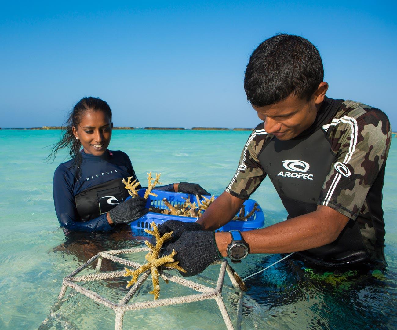 Kurumba Maldives Resort Coral Planting