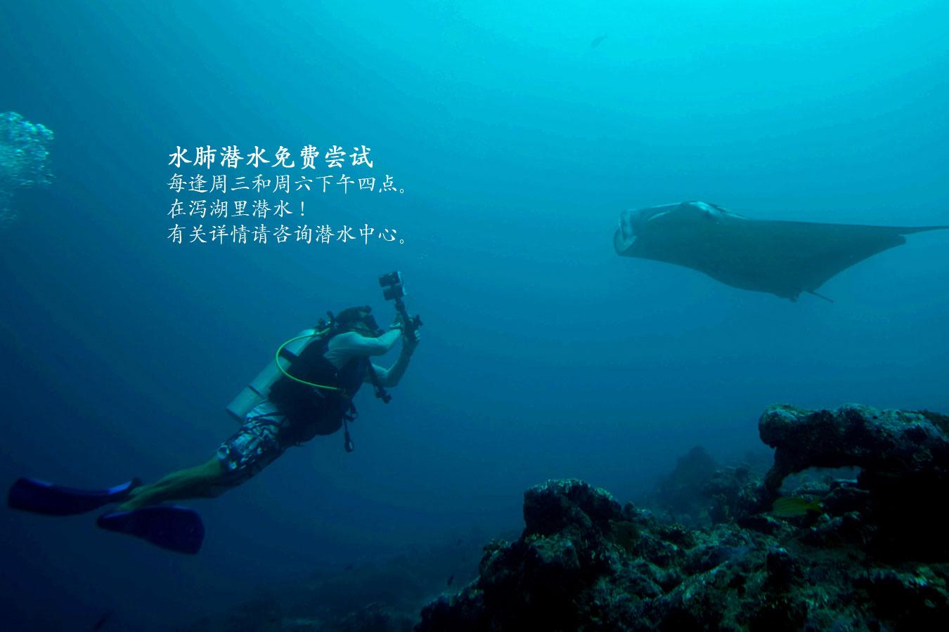 Dive-CH.jpg